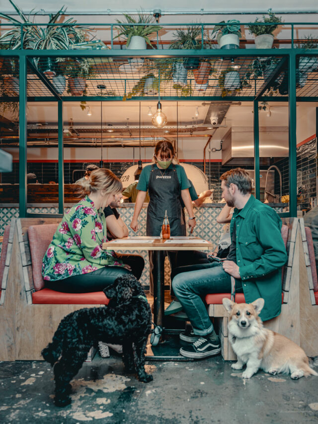 People dining with their dogs